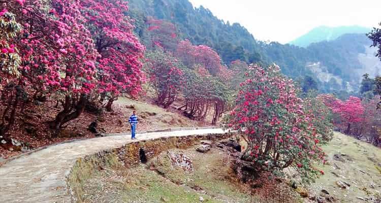 Beautiful View of Khirsu
