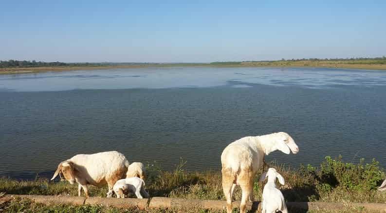 Hesaraghatta Lake